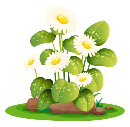 gardening: White daisy flowers in the bush illustration