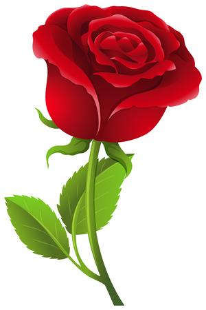 Red rose on stem illustration