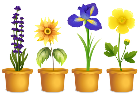 Different types of flowers in pots illustration Illustration