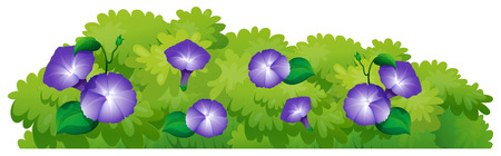 Blue morning glory flowers in green bush illustration