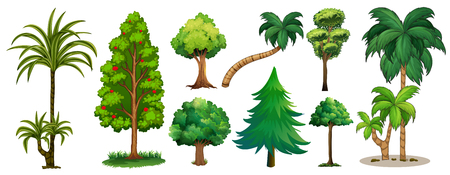 Different types of trees illustration Illustration