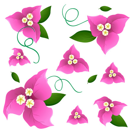 Seamless background design with pink bougainvillea flowers illustration Illustration
