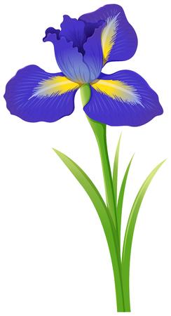 Blauwe irisbloem op witte illustratie als achtergrond
