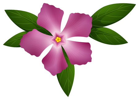 583 flowers periwinkle stock vector illustration and royalty free rh 123rf com