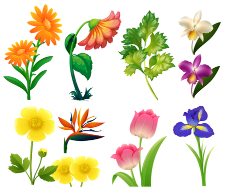 tulips isolated on white background: Different types of wild flowers illustration