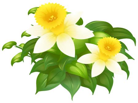 Daffodil flowers in bush illustration Illustration