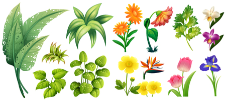 Different types of flowers and leaves illustration
