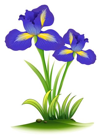 Blauwe irisbloemen in bush illustratie
