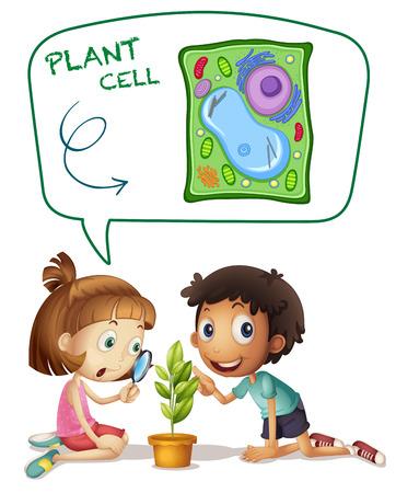 observing: Children looking at plant cell on leaf illustration
