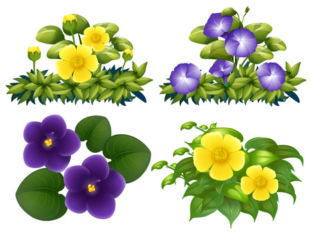 buttercups: Different types of flowers in bush illustration