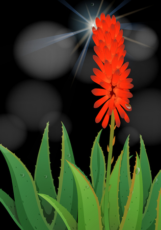 aloe vera plant: Aloe vera flower on black background illustration