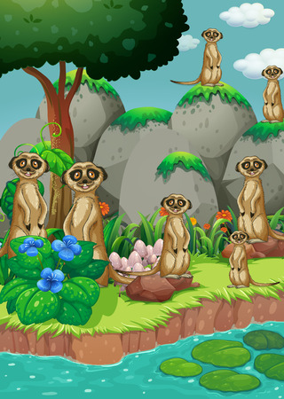 Many meerkats by the river illustration