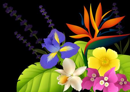 oiseau dessin: Différents types de fleurs sur fond noir Illustration