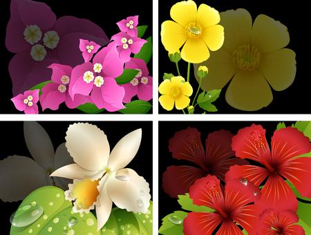buttercups: Flowers on black background illustration