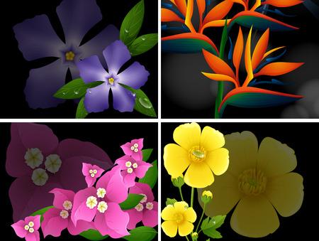 Four different kinds of flowers on black background illustration