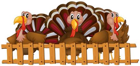 Three turkeys behind the fence illustration Illustration
