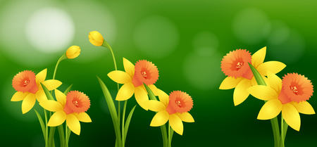 Daffodil flowers with blur background illustration Illustration