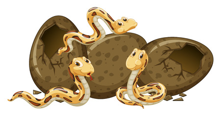 Three baby snakes and eggs illustration