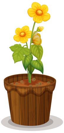 Yellow buttercup flowers in flowerpot illustration