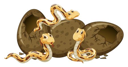 Three baby snakes hatching eggs illustration