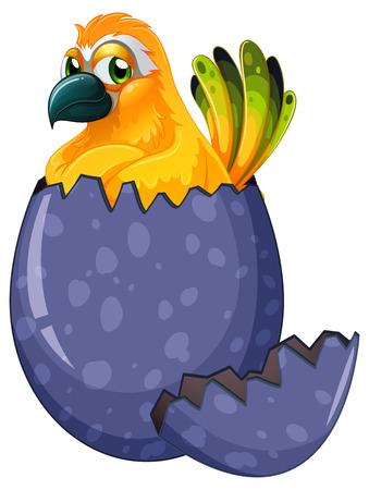 macaw: Yellow macaw bird hatching egg illustration Illustration