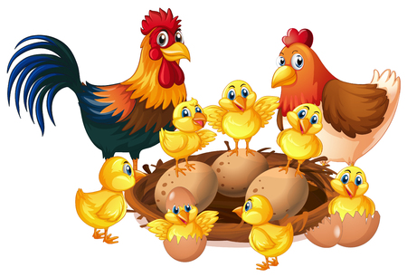 Chicken family on white background illustration Illustration