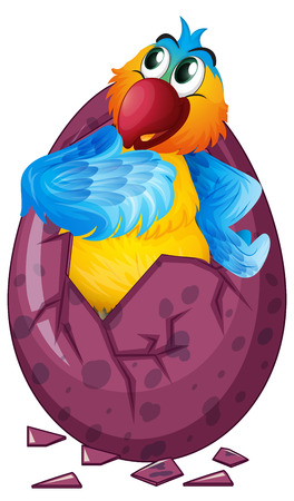 macaw: Macaw bird hatching egg illustration