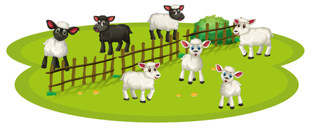 White sheeps and black sheeps on the farm illustration