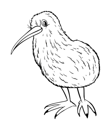 Animal outline for kiwi bird illustration