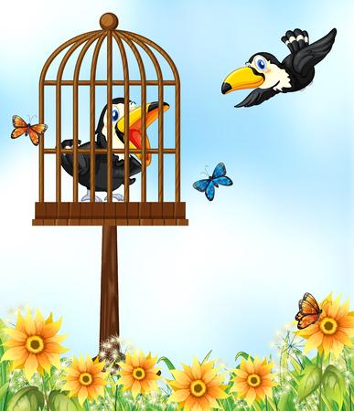 Two toucan birds in garden illustration