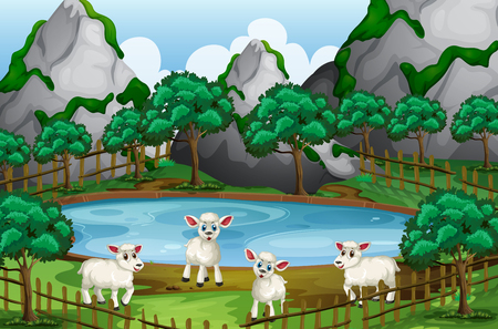 Four sheeps by the pond illustration
