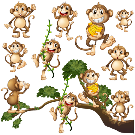 Wild monkeys in different actions illustration