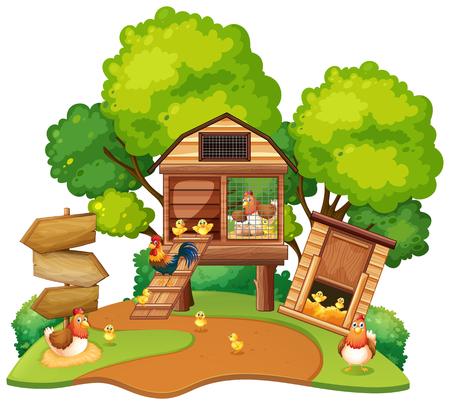Chickens lives in chicken coops illustration Illustration