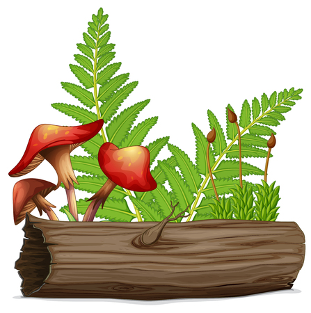 Mushrooms and log with fern in the back illustration