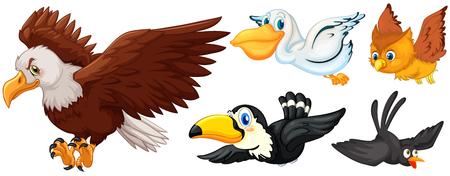 Different types of birds flying illustration