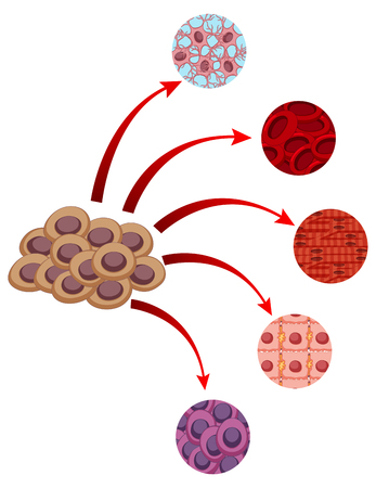 Diagram showing closer look of different cells illustration Illustration