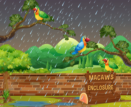 Happy Macaws in the Zoo at Night illustration  イラスト・ベクター素材