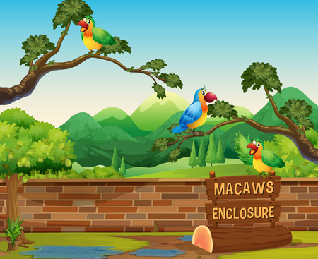Happy Macaws in a Zoo illustration  イラスト・ベクター素材