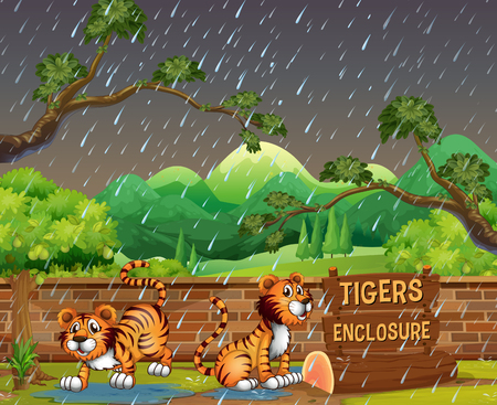 Happy Tigers in the Zoo illustration