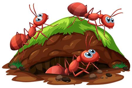 Illustration de fourmis ouvrières sur fond blanc