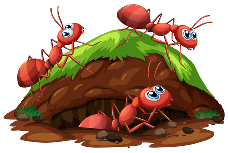 Worker Ants on White Background illustration