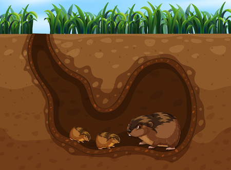 Guinea Pig in the Hole illustration