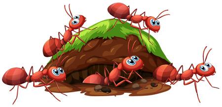 Un'illustrazione di formiche e foro rosso fuoco Vettoriali