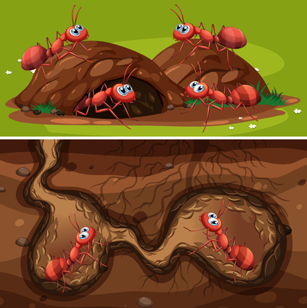 Fire Ants in the Nest illustration
