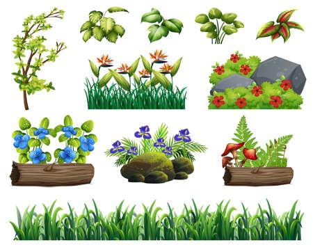 A Set of Forest Element illustration