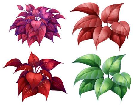 A Set of Colourful Plant illustration