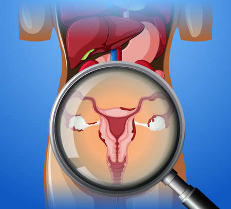 Female Reproductive System with magnifying glass illustration Illustration
