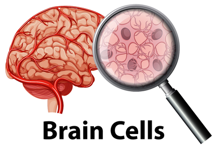 Human brain cell on white backgrounf illustration