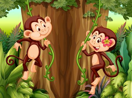 Monkey hanging from vine illustration