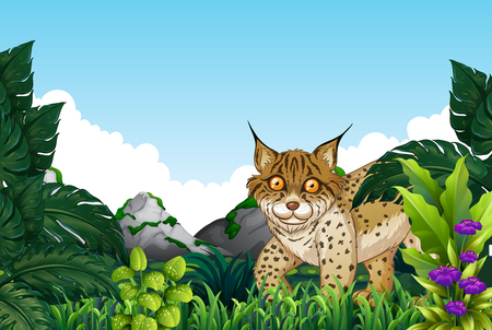 Lynx living in the forest illustration 일러스트